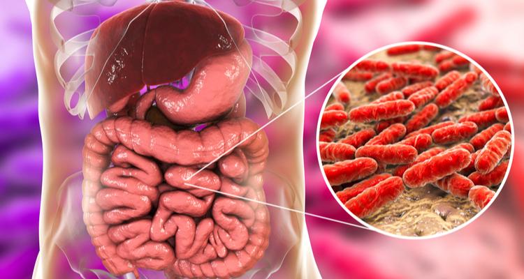 腸と乳酸菌